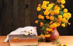Skintos gėlės – 15 gudrybių, kad jos ilgiau džiugintų