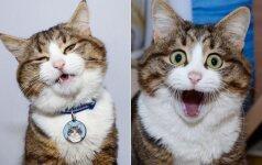 Stebėtinai išraiškingas katinas: pažiūrėkite, kiek emocijų jis moka parodyti