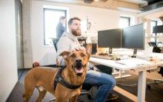 Vilniuje programuotojams dirbti padeda šunys: kartu jiems sekasi geriau