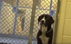 Jautrūs vaizdai: kaip pasikeitė šuo, supratęs, kad iš prieglaudos keliauja namo