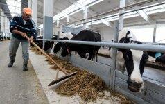 Pieno gamintojų banko sąskaitas netrukus papildys 25 mln. eurų
