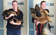 Pora originaliai įamžino, kaip per 8 mėnesius užaugo jų šuo