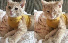 Šilumą mėgstantis katinėlis pavergė internautų širdis: dėvi rankų darbo megztinukus