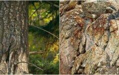 Gerai įsižiūrėkite: ar surasite šiose nuotraukose gyvūnus?