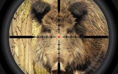 EK: medžiotojai, kontaktuodami su šernais, patys gali tapti viruso platintojais