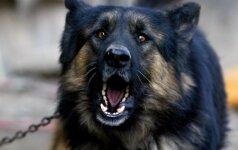Kodėl šuo loja ir kaip jį nutildyti?