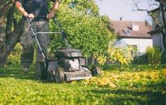 Svarbiausi žingsniai, kaip paruošti veją žiemos miegui