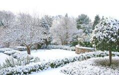 Kaip nuo šalčio apsaugoti sodo augalus
