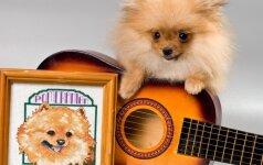 Šunys-gitaros virtuozai prajuokino tūkstančius žmonių VIDEO