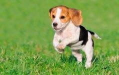 Pasidalink savo šuns nuotrauka ir laimėk savaitgalį su keturkoju Druskininkuose