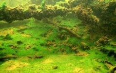 Dvi lietuvės atskleidė, kokias paslaptis slepia Lietuvos ežerai