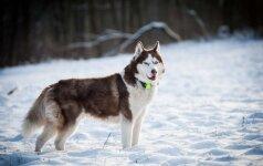 Svajojantiems apie sportinį šunį: realybė gali būti visai kitokia