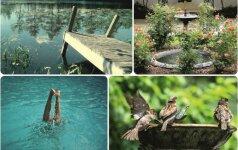Kokį vandens šaltinį savo kieme įsirengti geriausia?