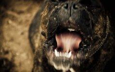 Nuo grandinės nutrūkęs šuo apdraskė mažametį