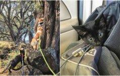 Neįtikėtina draugystė: katinas išgelbėjo beglobę katytę ir tapo jos mokytoju