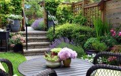 Žiema artėja: kaip paruošti dekoratyvinius augalus šaltajam laikotarpiui?