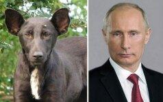 Ar jums šie gyvūnai nieko neprimena?