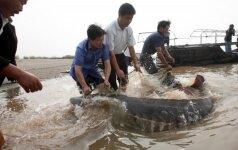 Kinijoje kilo pavojus daugiau nei 140 mln. metų egzistuojančioms žuvims