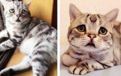 Katinas, kuriam būtų sunku pasakyti NE