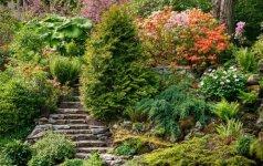 Svarbu: nustatyti reikalavimai, kaip sodinti medžius ir krūmus privačioje žemėje
