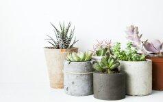 6 dizaino pamokos, kurių galime pasimokyti iš skandinaviškų interjerų