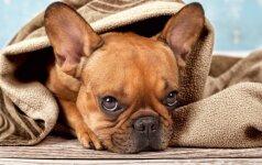 Veislynai, iš kurių nepatariama pirkti šuniukų