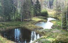 Ko galima pasimokyti iš pavyzdingiausių miško savininkų?