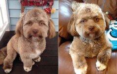 Internautai sutrikę: kuo ilgiau žiūri, tuo labiau šis šuo primena žmogų