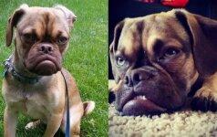 Earlas - niūriausias šuo pasaulyje!