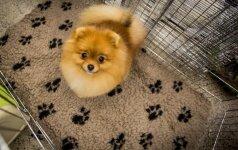 Nepatenkintiems gyvūnų ženklinimu: šunys Lietuvoje ženklinami jau nuo Rusijos imperijos laikų
