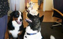 Biuro darbuotojai parodė, kaip dirba penktadieniais: gyvūnų namuose nepalieka