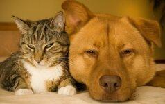 """""""Valstietis"""" siūlo privalomą naminių gyvūnų registraciją ir ženklinimą"""