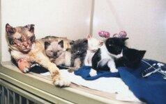 Mama katė penkis kartus ėjo į degantį namą, kad išgelbėtų savo mažylius
