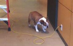 Laido išsigandęs šunelis rado genialų būdą, kaip praeiti