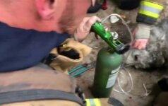 Ugniagesiai iš degančio namo išgelbėjo ir atgaivino šunį