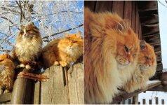 Sodybą pavertė kačių šalimi: pažiūrėkite, kokios gražuolės čia gyvena