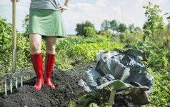 Kokie mirtini pavojai tyko dirbančių soduose