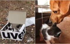 Kačiukai buvo palikti mirti kalnuose: juos radęs šuo tapo jų gelbėtoju ir globėju