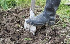 Kodėl rudenį naudinga perkasti dirvą