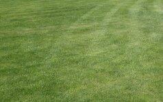Išsamus gidas, kaip prižiūrėti veją