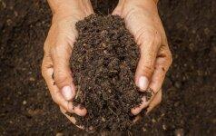 Agronomas atskleidžia, koks turi būti paskutinis darbas šiltnamyje rudenį