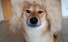 Šuns išvaizdos pokyčiai: keturkojai irgi turi kantrybės ribas