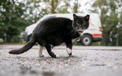 Bus bandoma humaniškais būdais mažinti benamių kačių populiaciją