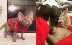 Jaudinosi, kaip į priglaustą vienaakę katytę reaguos šuo: gyvūnų santykiai nustebino