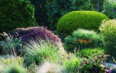 Sezono aktualijos: išraiškingi žolynų ornamentai