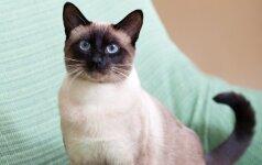 Katės, kurioms senovėje kurtos poemos