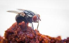 Priežastis, kodėl maistą būtina slėpti nuo musių