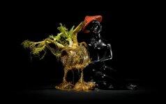 Įstabiose fotografijose supuvęs maistas virsta meno kūriniais