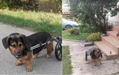 Šunelį prikėlė antram gyvenimui – pagamino specialius ratukus