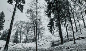 Gamtos grožybės Vilniaus pakraštyje